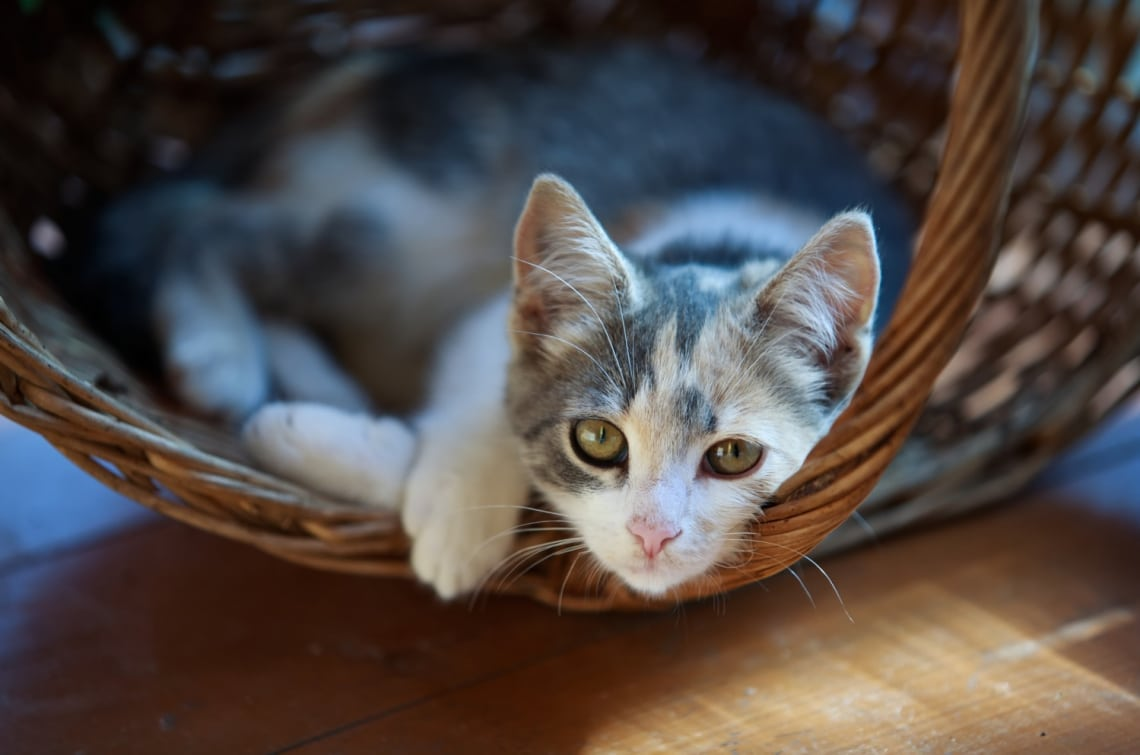 A cicákat is lehet idomítani. Ismerd meg a klikker módszert!