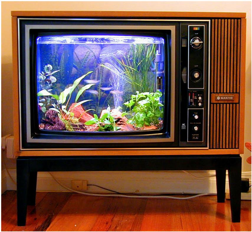 Csodaszép akváriumok, amelyeknek nem csak a halaid örülnek majd