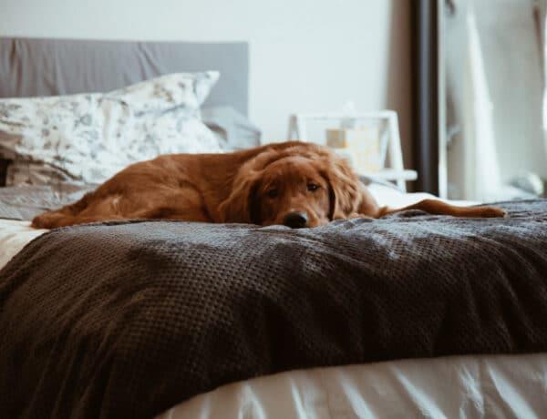Egészségtelen a kutyáddal aludni? Az igazság erről a megosztó kérdésről