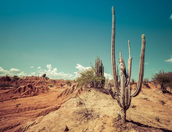 Egy fantáziadús személyiségteszt: Te mit látsz a sivatagban?