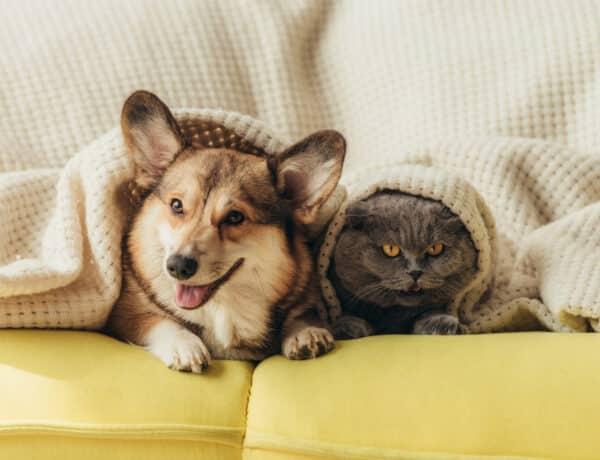 Egy kutatás bebizonyította: a kutyák okosabbak, mint a cicák