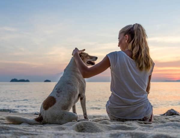 Egyesek imádják a kutyákat, mások kevésbé: mindenről EZ tehet