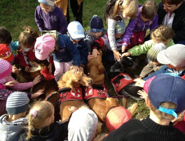 Egyre népszerűbb itthon is az állatasszisztált terápia