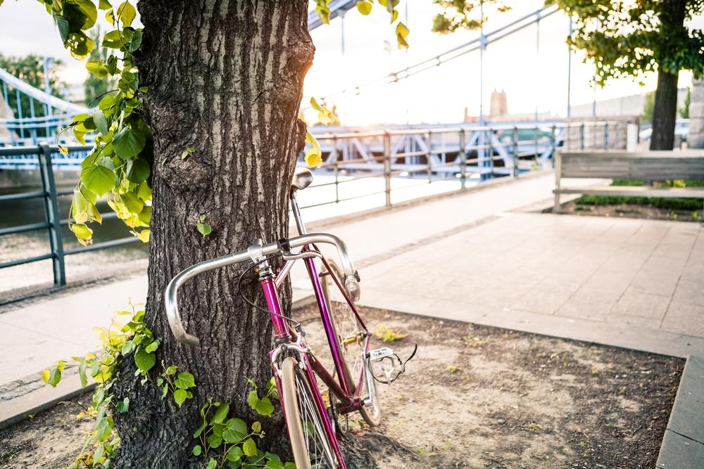 Emberre is veszélyes lehet! Egyre több Budapesten a gombás megbetegedéssel fertőzött fa