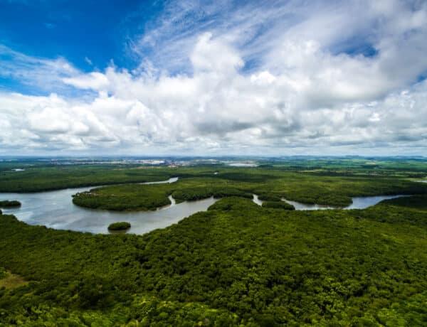 Emiatt olyan nagy baj, ami az Amazonasszal történik