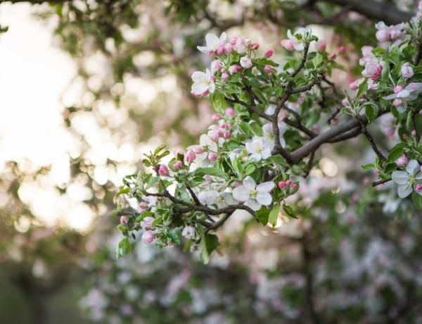 Ezek a fák csodaszépek és kis helyen is elférnek – Ültesd el őket még idén!