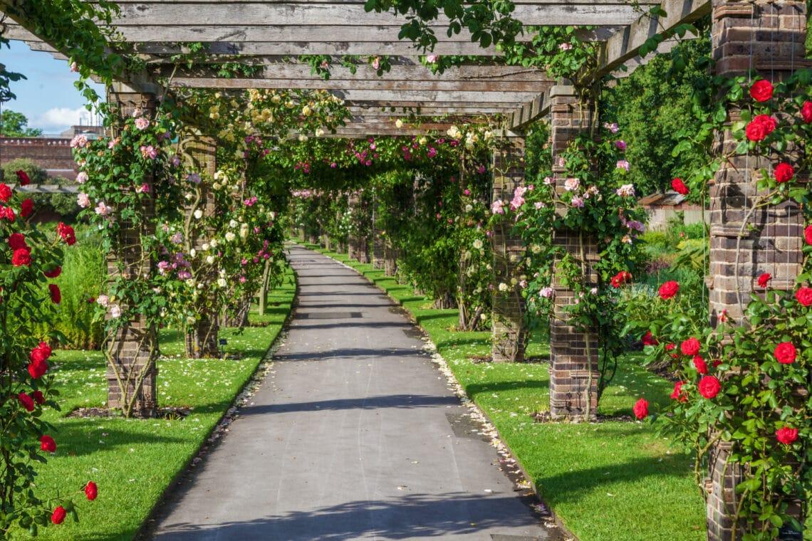 Ezek lesznek a legszebb futónövények a kertedben