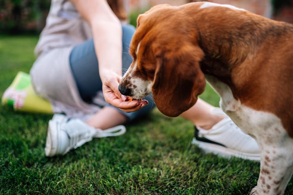 Ezeket az ételeket soha ne add a kutyádnak – Ennyire árthatsz vele