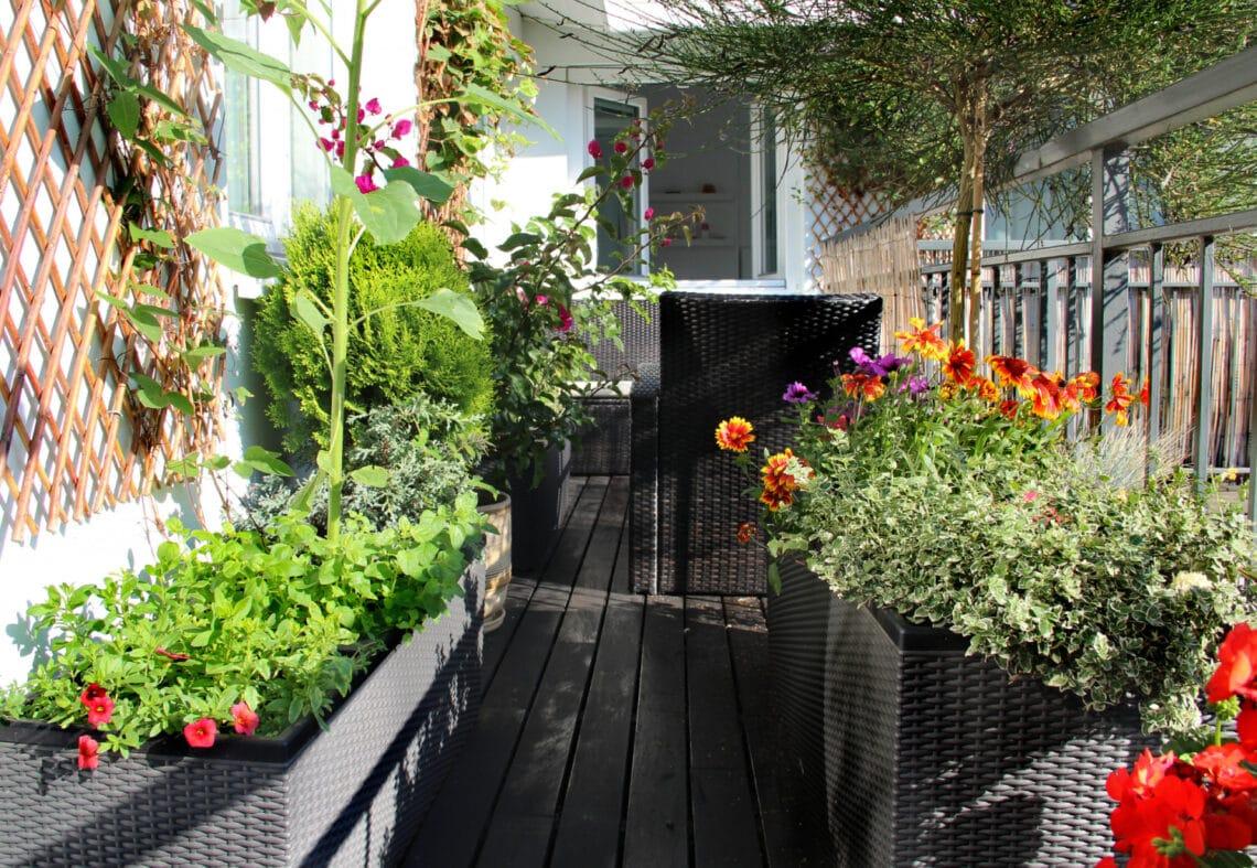 Ezekkel érdemes beültetni a balkont! 10 fűszernövény és zöldség, aminek itt a helye, ha nincs kerted