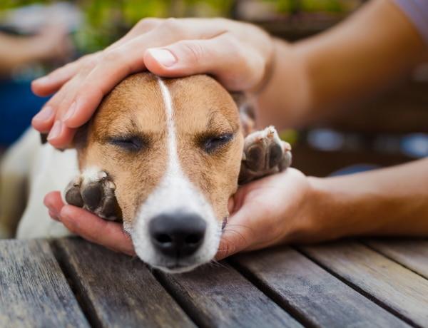 Így veheted észre a rák jeleit a kutyusodon