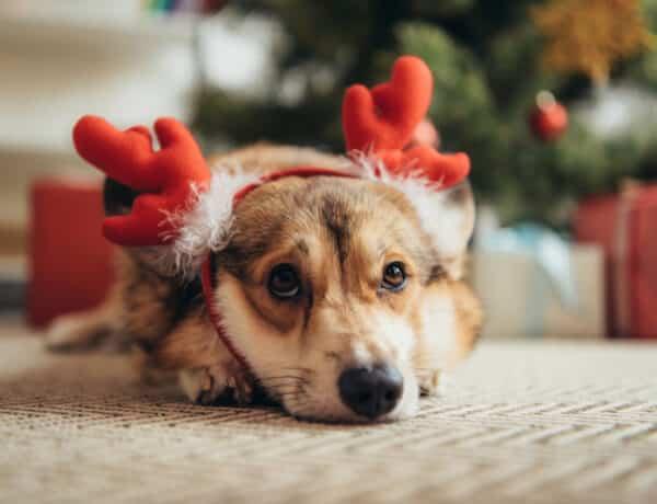 Ezt tedd meg a kutyádért szilveszterkor, hogy a lehető legkisebb trauma érje