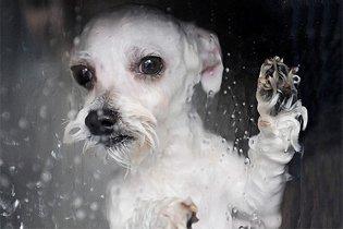 Felfedezték a kutya és macska-mosógépet