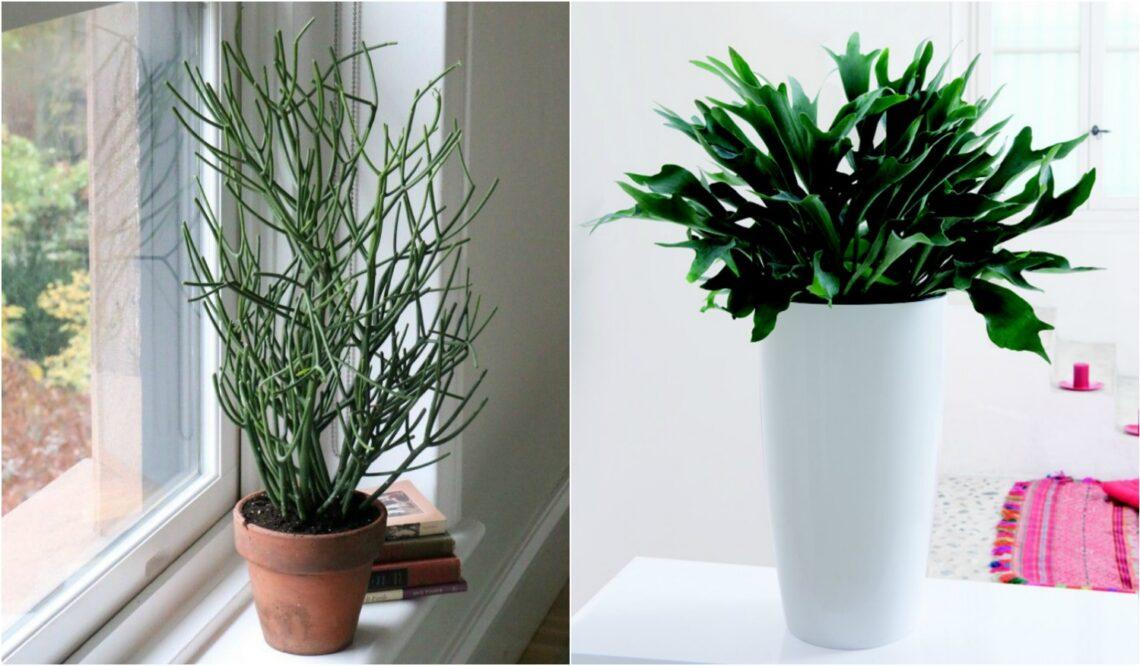 Furcsa és egyedi szobanövények – Tedd izgalmassá velük az otthonod!