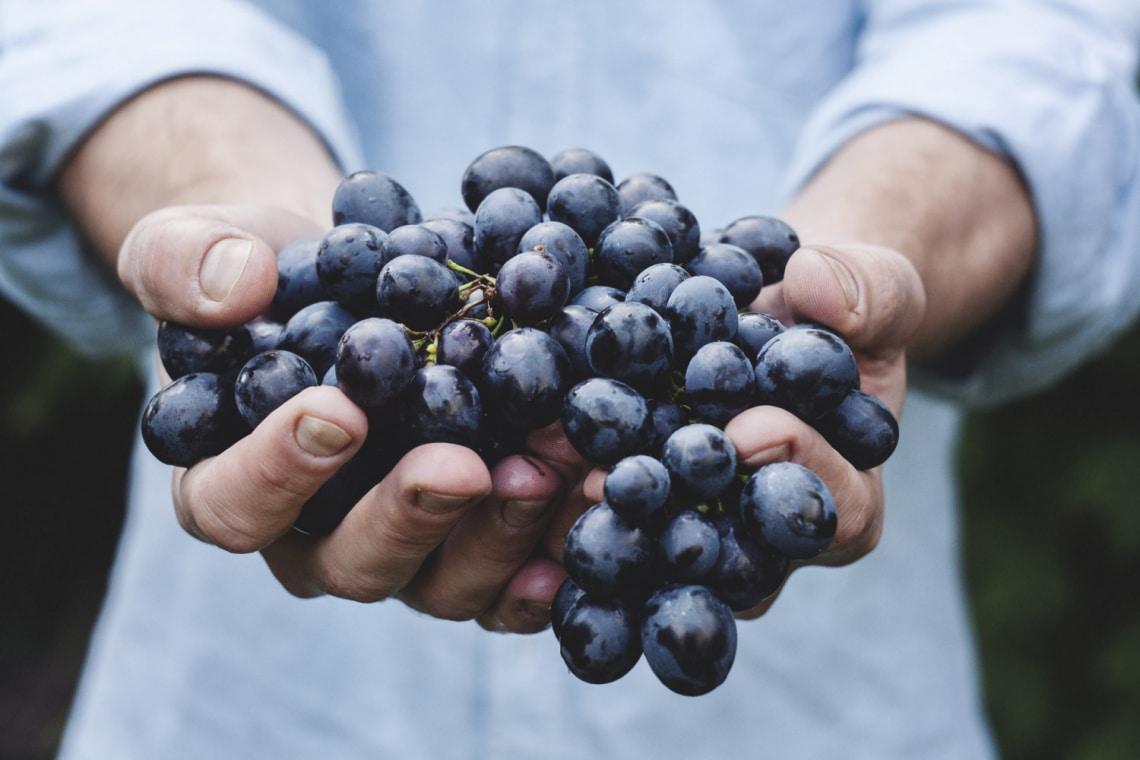 Az őszi gyümölcs, ami megelőzi a rákot és az agynak is jót tesz