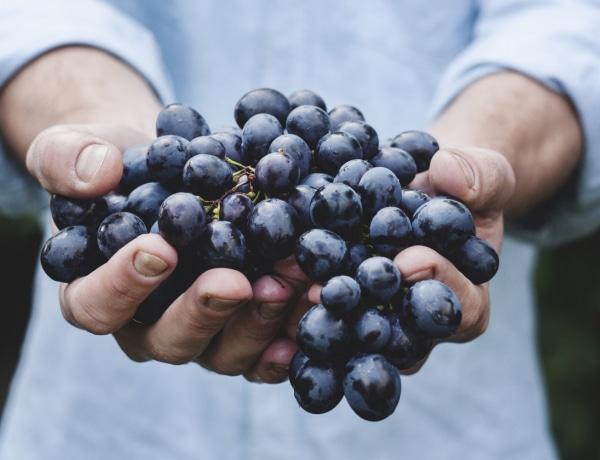 Ha ősz, akkor szőlő – nemcsak a rákot előzi meg, az agynak is jót tesz