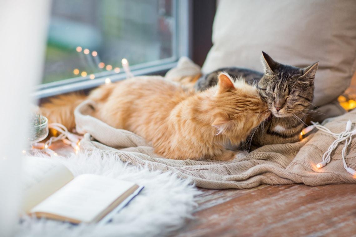 Ha szereted a cicákat, ezeket a macskás könyveket nem hagyhatod ki