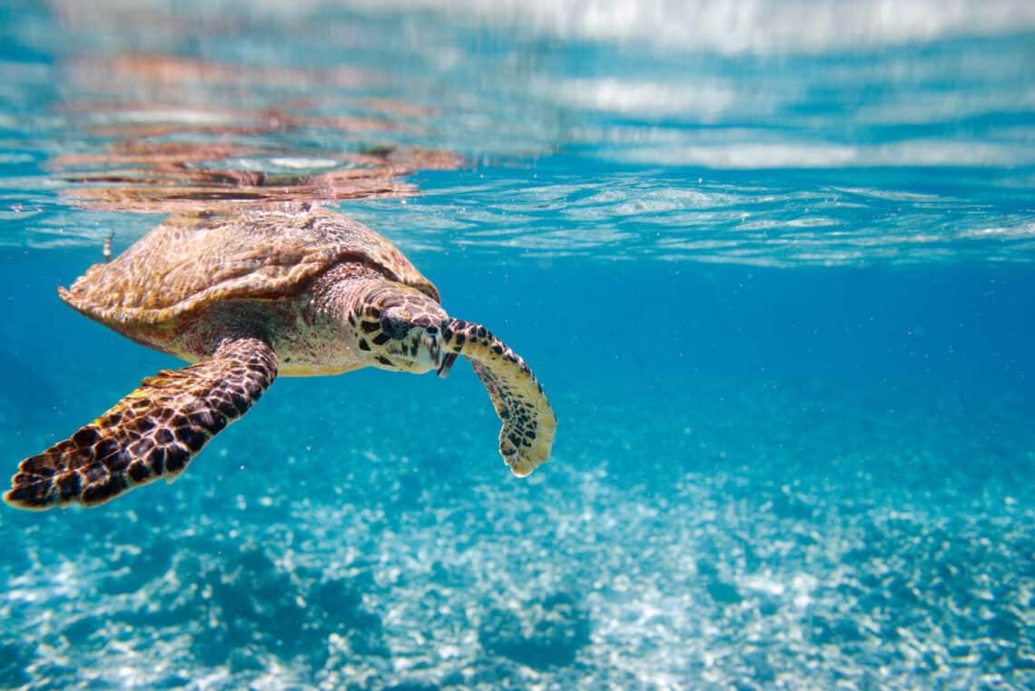 Halhatatlan állatok, amelyek gyakorlatilag örökké is élhetnének