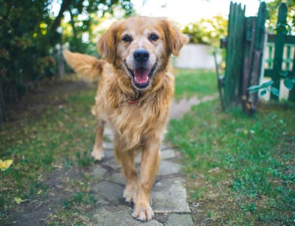 Hatalmas különbségek vannak a nőstény és hím kutyusok közt, ugyanazon a fajon belül