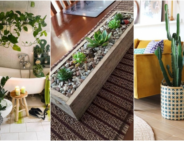 Hogyan helyezd el a szobanövényeket a lakásban, hogy jól mutassanak? 5 dekor tipp