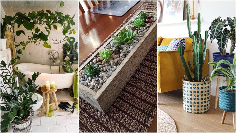 A fukszia jó szobanövényeket készíthet