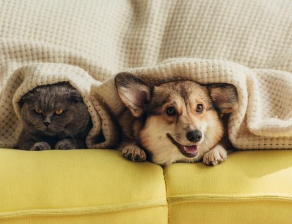 Koronavírus: Így segíthet rajtad egy háziállat karantén idején