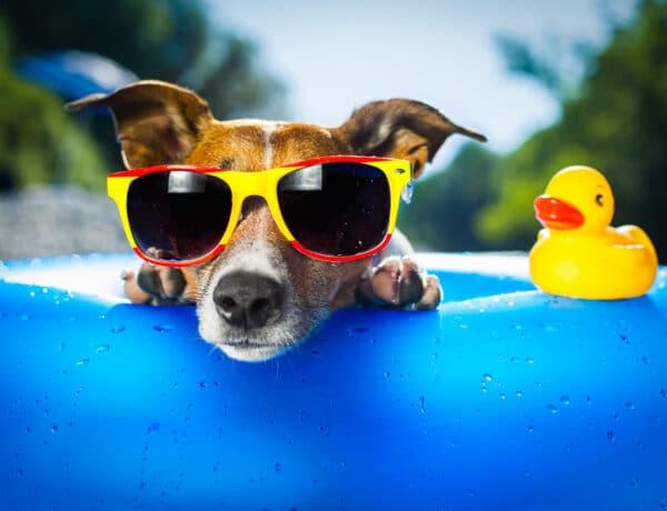 Kutyával nyaralnál? Ezek a külföldre utazás feltételei