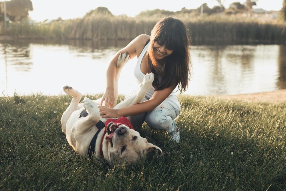 Kutyasors: társat válassz és ne játékszert