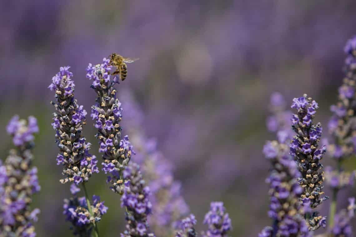 Méhecskementés házilag, avagy segítsd e létfontosságú rovarok fennmaradását