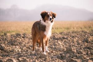 Mennyire okos a kutyád az átlaghoz képest? Íme egy teszt, amiből kiderítheted