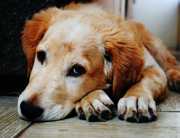 Mennyit ér egy kutya élete? Ezt is kiszámolták