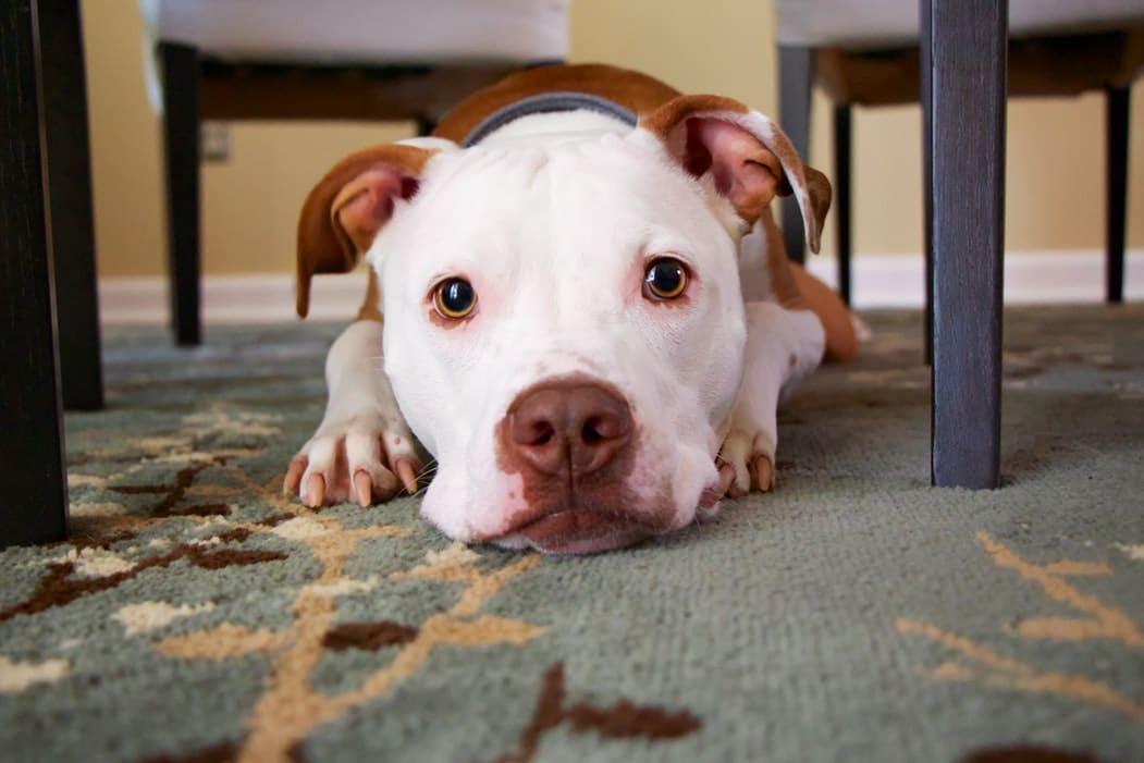 Mi legyen a kutyussal, amíg nyaralsz? 4 lehetőséged van