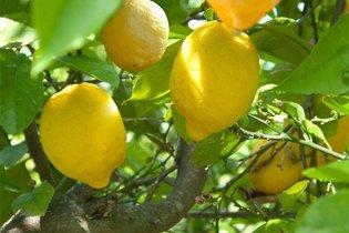 Mi mindenre jó a citrom?