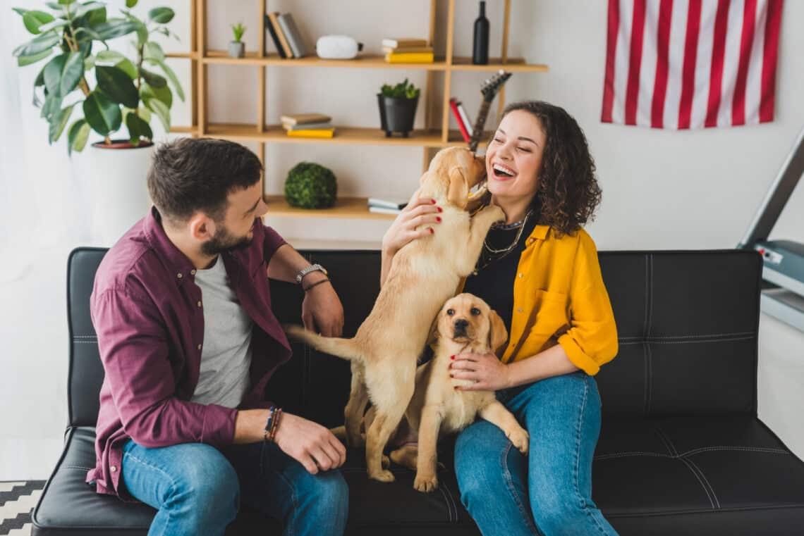 Minden kutya más: az 5 leggyakoribb személyiségtípus