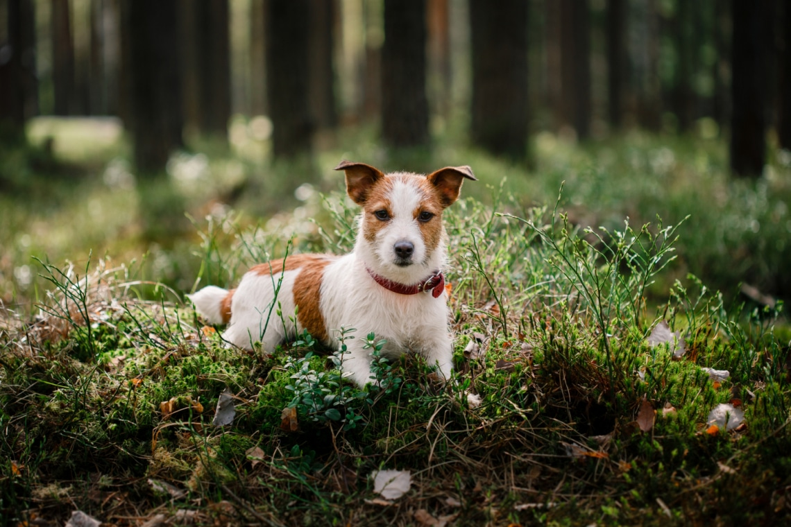 Mit érez a kutyád? 6 testbeszéd típus és jelentése