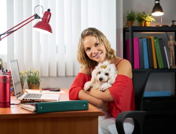 Négylábú az irodában – Kutyabarát munkahelyek
