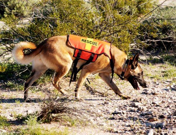 Négylábú hősök: a legmeghatóbb kutyatörténetek