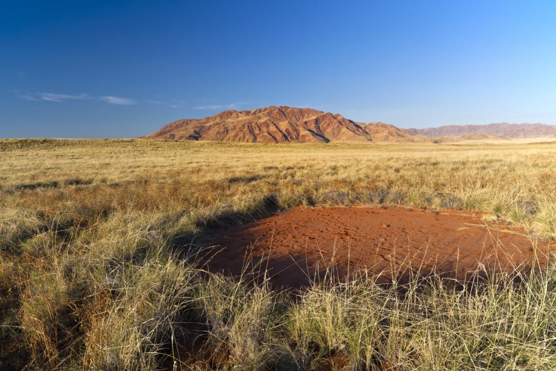 Olyan a sivatag, akár egy nagy, foltos szőnyeg – Senki nem tudja az okát