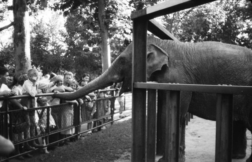 Pénzszámoló elefánt és Deák Ferenc kedvence – Az Állatkert legendás állatai