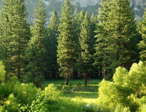 Sírkő helyett fát ültetnek a sírok fölé ebben az erdőben