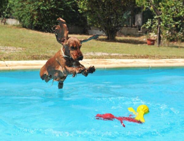Strandolás a kutyával? 6 tipp, amit ha betartasz, szuper időtöltésetek lesz!