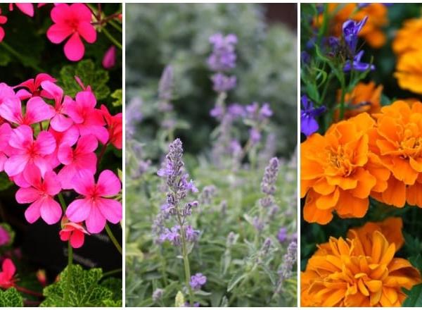Szúnyogmentes nyárra vágysz? 5 növény, amit már most érdemes elültetni a kertedbe