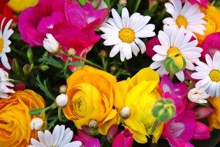 Tavaszi virágok galériája