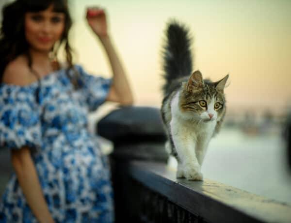 Terhes vagyok, mi legyen a macskával? Minden, amit a toxoplazmózisról tudnod kell!