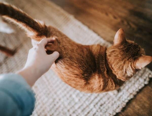 Tudtad? A gazdi személyisége befolyásolja a cicáét is