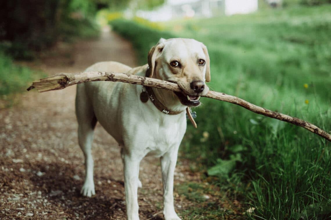 A kutyád szemében te vagy a falkavezér? Ezekből a jelekből kiderítheted