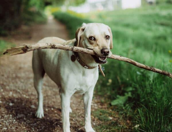 Vajon a kutyád szemében te vagy a falkavezér? Ezekből a jelekből kiderül