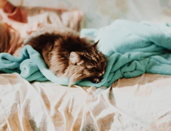 Érdekes dolog derült ki a macskákról: a vallásos emberek kevésbé szeretik őket