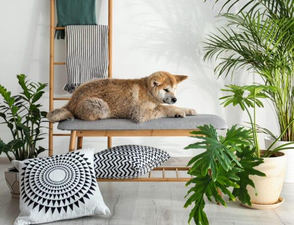 6 szobanövény, amit imádnak a lakberendezők: ennek is van trendje!