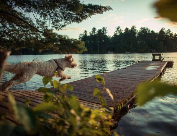 6 szuper kutyabarát magyar szálláshely