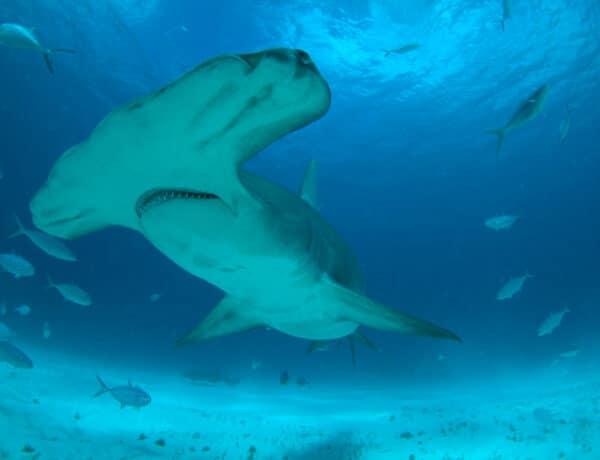 Ide ne utazz, ha félsz a cápáktól! – Cápák a strandon